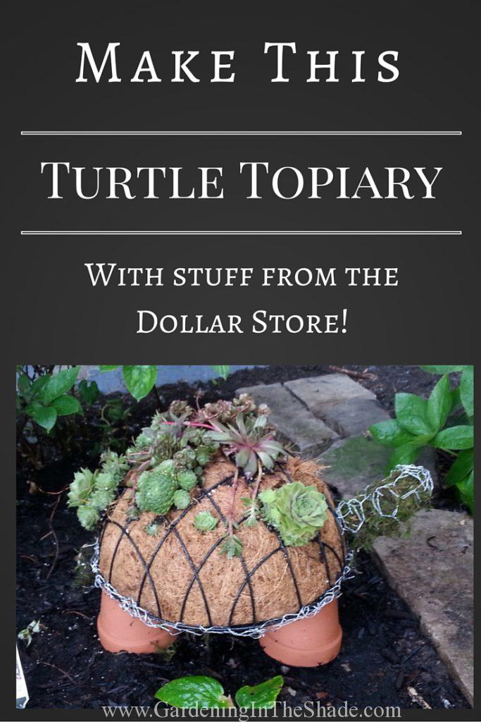 How To Make A Succulent Turtle Topiary Gardening In The Shade